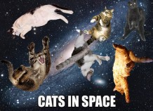 catsinspace