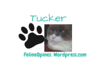 Tucker the 16-pound cross eyed rescue cat