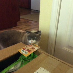 Tucker the cross-eyed Siamese rescue cat  inspects BlogPaws swag