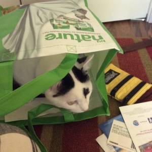 Oliver the black and white  rescue cat  inspects BlogPaws swag