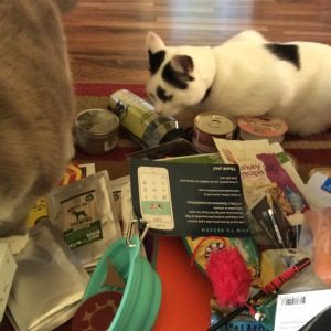 Oluver the black and white rescue cat  inspects BlogPaws swag