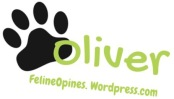 oliver the black and white kitten