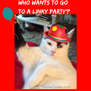 Oliver the black and white kitten invites you to a Linky Party