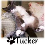 Tucker_SigInChair