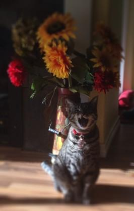 AmeliaYells+_Flowers