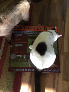 Oliver the cat inspects the cation tunnel