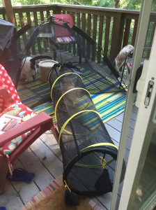 the kittens test the catio tunnel outside