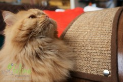 QuickSnap-Replaceable-Cat-Scratcher