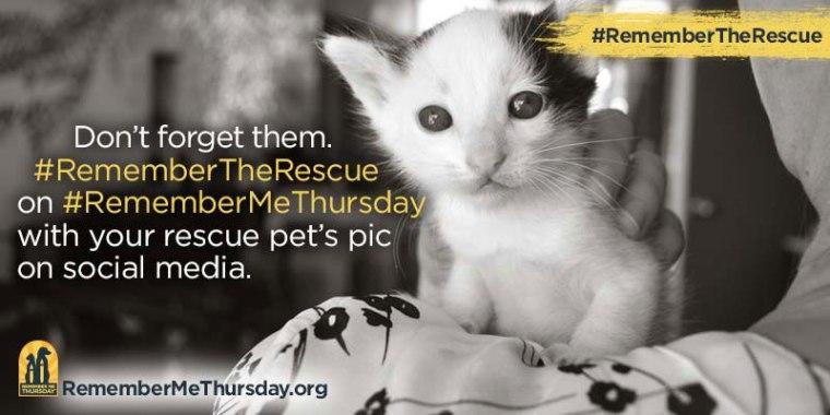 remember me thursday shelter event