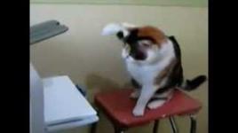 cat attacking a printer