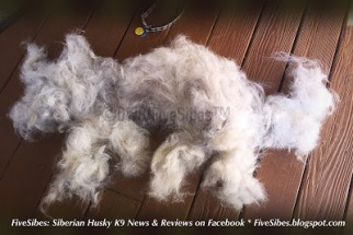 fur from dog gooming is enough to make another dog