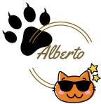 alberto the Siamese cat