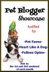 pet blogger showcase