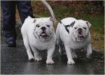 storm preparedness for pets