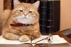 ginger tabby reading book with glasses