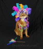 Sparkle Cat in a mardi gras costume