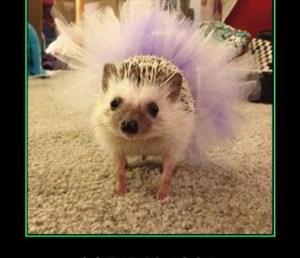 Hedgehog in tutu
