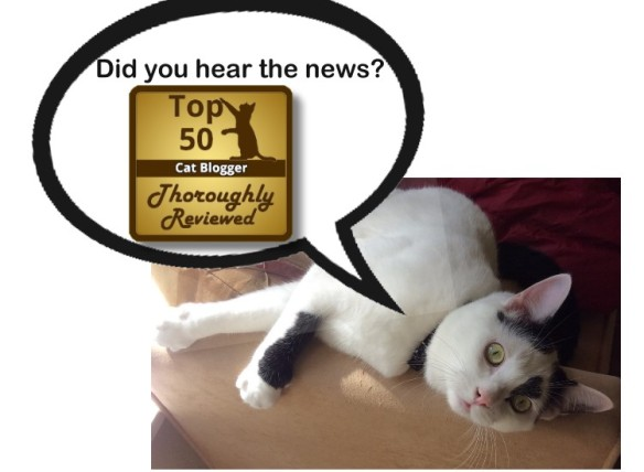 one of the top 50 cat bloggers as designated by thoroughly reviewed