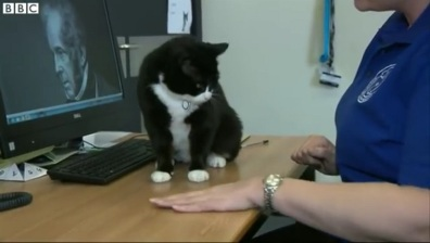 tuxedo cat works at the British Foreign Office