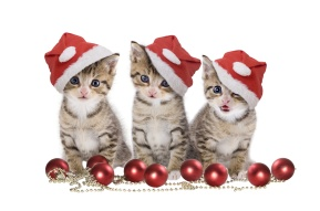 tabby kittens with Christmas hats