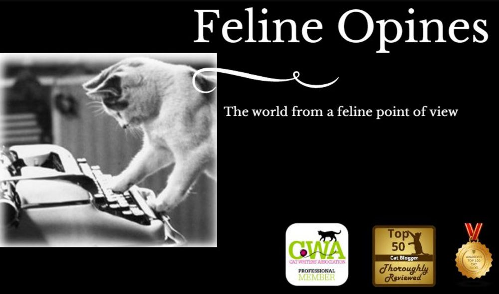 Feline Opines Is A Blog With Stories About Anything And Everything From Felines Point Of View Lot The Posts Are Funny Whimsical Probably