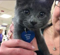 gray kitten at shelter with tag that says will you marry me
