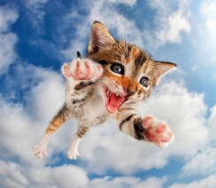 "kitten flying through the air for the book ""Pounce"""