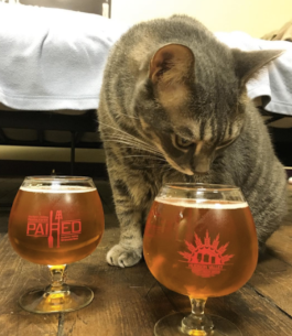 tabby cat is chief mouser at brewery