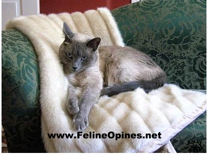Siamese cat on fur throw