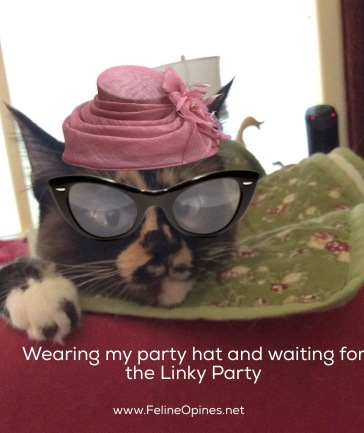 cat in pink hat and cat eye glasses