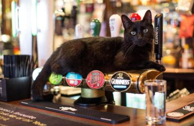 black English pub cat