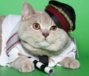 russian police cat Rusik sniffs out caviar