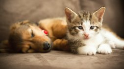 puppy and kitten cuddling together