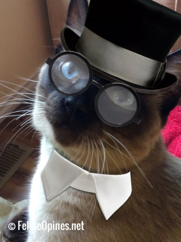 Siamese cat with top hat, round glasse sand white collar