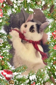 Black and whit kitten with a red ribbon and Christmas frame