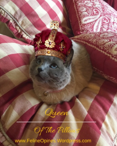 Siamese cat with a crown