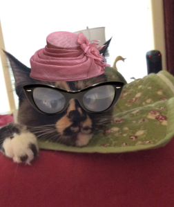 Cat in hat and glasses