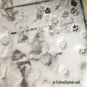Cat paw prints in the snow