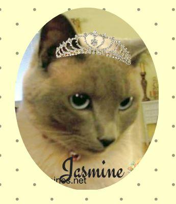 Siamese cat with tiara