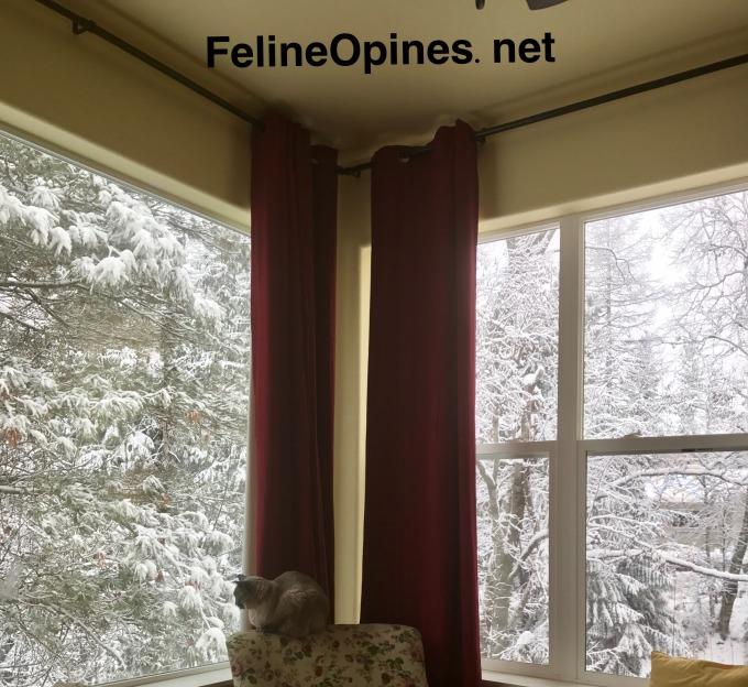 Siamese cat sitting at a snowy window