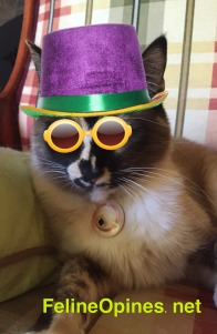 cat with New Years hat and glasses