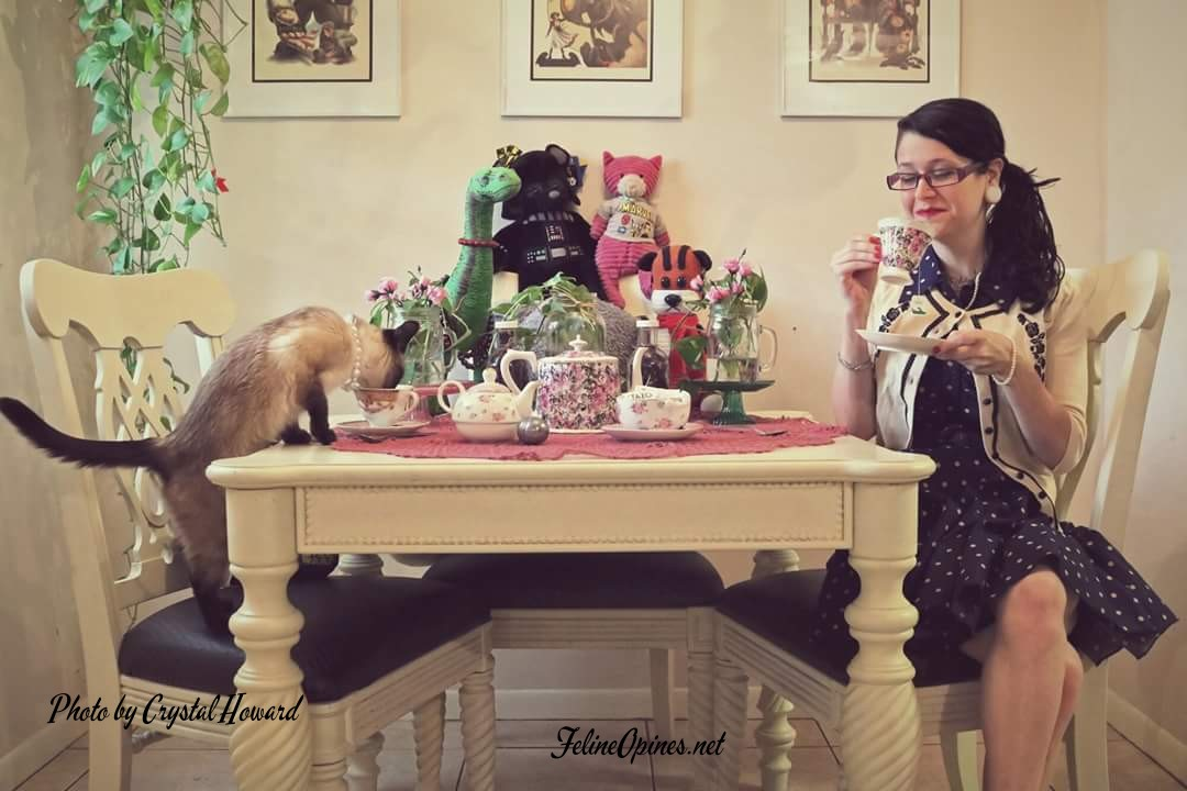Siamese Cat and human having a tea party