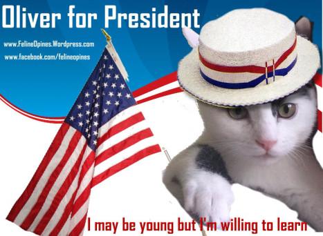 black and white kitten runs for president