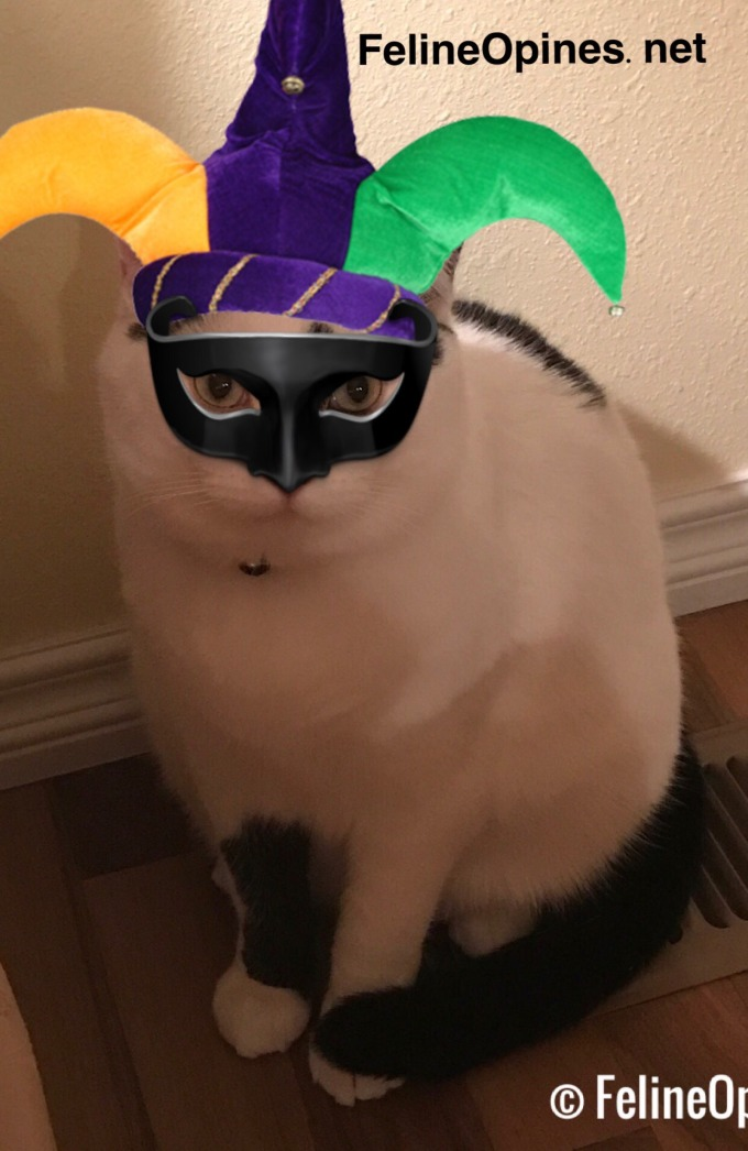 Black and white cat with new years mask and hat