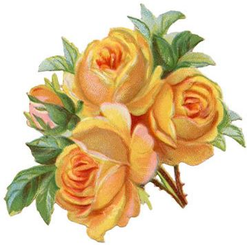 bouqet of yellow roses