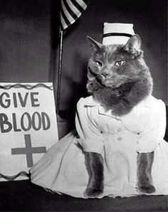cat in a nurse costume next to a give blood sign