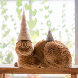 a ginger cat wearing a hat made from his own hair