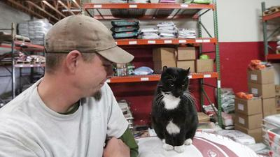 black and white cat has a job at a feed store