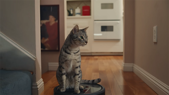 tabby cat riding a roomba