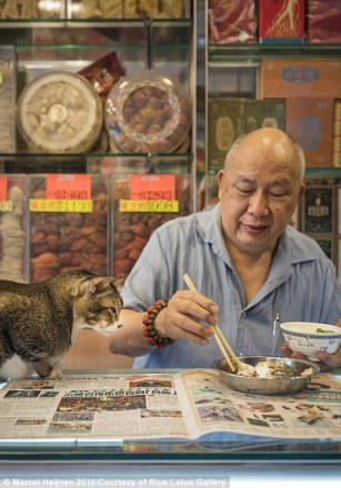 hongikongshopcats